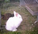 c'est mon lapin