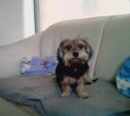 mon chien (choupette)