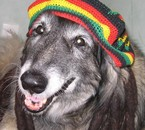 La Zen attitude : Cool .. ça vous fait Marley ???