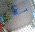 la chambre de mes perruches ondulées