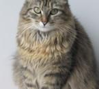 my cat fait 1 pose photo