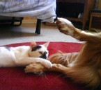 maitika entrain de lui fr des chatouille