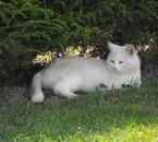 Le chat de ma mamie ! ! il est trop mimi ! c'est neige
