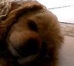 mon teddy
