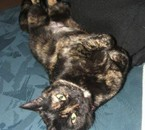 Chipie ma chatte de 19ans morte le 21 juin 2010