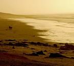 Maroc, plage d'Aglou en février 2009