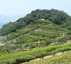 Ile de Busan