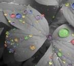 la vie en couleur...