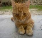 bambi, la chat de ma seur