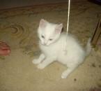 Mon nouveau petit chaton une boule toute blanche