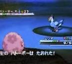 Nom français : ??? Nom Japonais : Hatooboo Type : ??? Tail