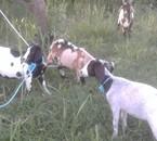 et c'est reparti nouvel élevage 2010