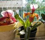 la passion de tetia les orchidées