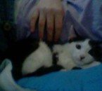 tettine, mon chat