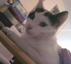 voyou mon deuxième chat le fils de dalila