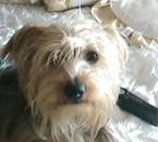 ma chienne