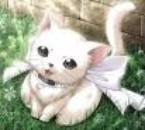 Un tit chat