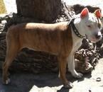 mon chien =)