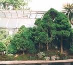 la plus grande forêt bonsai au monde