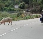 Vous ne rêver pas il est bien sur la route !