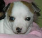 Femelle de Rosy 1 mois
