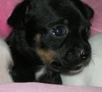 Femelle de Lady noir, 1 mois