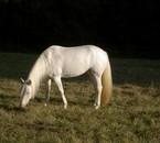 Le beau petit cheval blanc