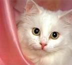 oh les beux yeux! =)