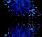 la rose du bien