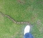 mon python évolue 01/12/10