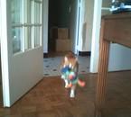 mon chat pompon
