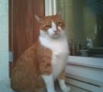 pompon décédé le 15 octobre 2010 ,
