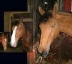 mais chevausc adorer a l equitation je les monte tous   c es