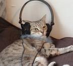 Tina mon chat