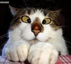 un chat mdr