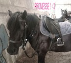 Promesse ♥
