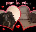 le chat  s' appelle  evera   et le chien  volka