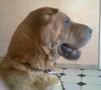 mon chien foufoune tro belle