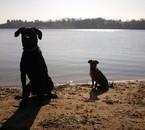 Mes 2 chiens Tay et Luna