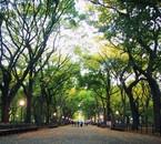 Central Park - Mon voyage à New York du 02/05 au 09/05