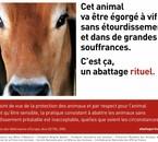 http://www.fondationbrigittebardot.fr/site/actu.php?id=40295