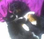l'amour entre chien et chat! Orka et Nina
