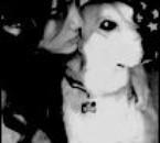 Miley et un chien