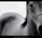 La beauté est dans les yeux des chevaux