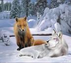 Le mystérieux Renard et l'étrange Loup Solitaire...