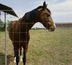 Magnifique cheval :)
