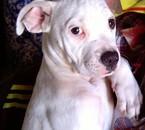 Je vous Presente Ma Petite Fille GUESS Née Le 15/03/2011
