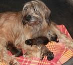 Kashka et ses bébés