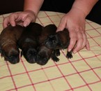 4 cadells d'atura català