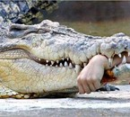 Dont feed the Crocodiles!!